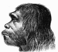 Homo sapiens neanderthalensis /www.wikipedia.org