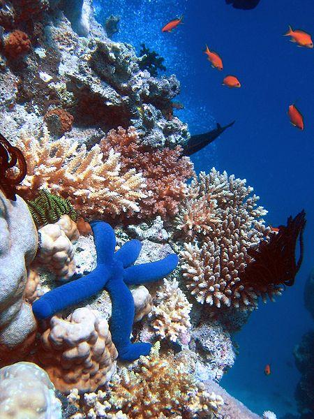 Bioróżnorodność rafy koralowej./ źródło: wiki; Richard Ling (CC BY-SA 3.0) ©2007