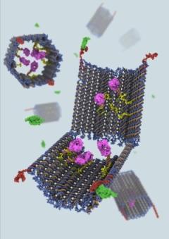nanoboty