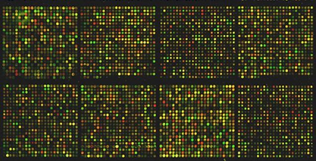 Macierz cDNA. /źródło: flickr, Kat Masback (CC BY-SA)