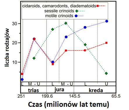 wykres przedstawiający zmiany liczby rodzajów jeżowców i liliowców w mezozoiku