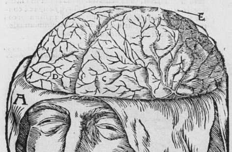 XVI-wieczna rycina ilustrująca preparację mózgu. /źródło: flickr; Shaheen Lakhan (CC BY 2.0)