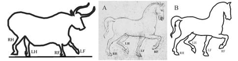 Porównanie starożytnej grafiki czworonożnego zwierzęcia z nieco bardziej współczesną: ze szkicem autorstwa Leonarda da Vinci. /źródło: Horvath et al., PLoS ONE 7(12): e49786; doi:10.1371/journal.pone.0049786 (CC BY-SA 2012)