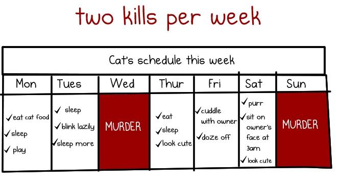 Grafik bardzo zajętego kota: morderstwo stanowi w nim ważny punkt programu. /źródło: The Oatmeal, przedruk za zgodą autora