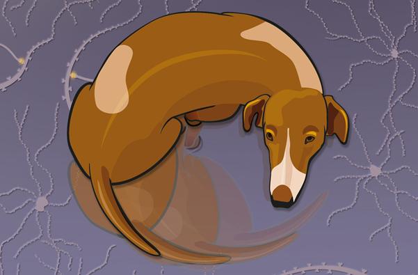 Pies wykazujący objawy OCD. Przedruk z Karlsson et al., Genome Biology (2014) 15(3):R25 (CC BY)