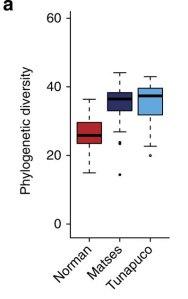 Filogenetyczna różnorodność flory jelitowej trzech badanych populacji. /źródło: Obregon-Tito et al., Nat Comms 2015, 6:6505