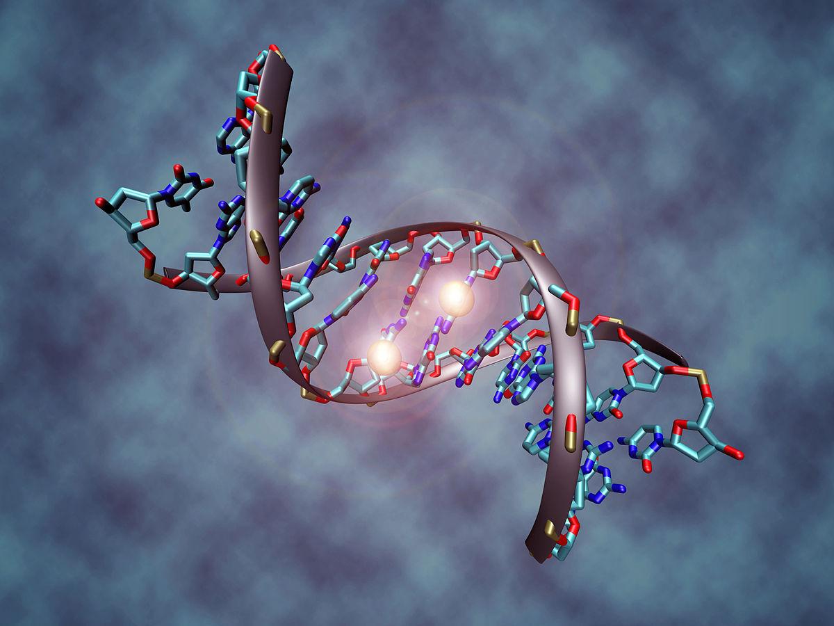 1200px-DNA_methylation
