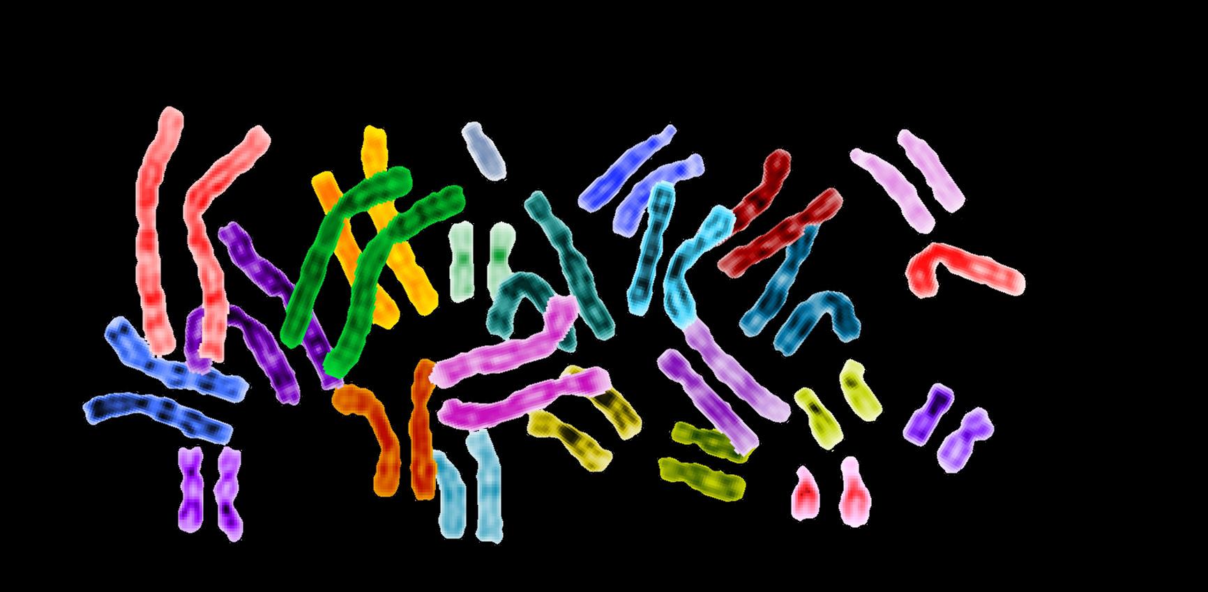 Human chromosomes on a black background.